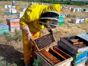 Beekeeping in Iran